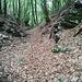 La parte bella del Sentiero Dal Zotto