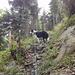 Schön einsamer Weg durch die Natur