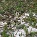 Dicke Schichten Hagelkörner vom Vortag und viele von den Bäumen abgeschlagene Ästchen.
