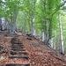 Il bel sentiero nel bosco