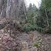 Die Markierung rechts am Baum da beweist es. Das ist der Bergwanderweg. Morast und niedergeschlagene Bäume, sacksteil.