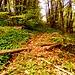 L'inizio della traccia che si stacca dall'E1 e conduce ai vari attacchi della palestra di roccia. Si noti il verdissimo tappeto di aglio selvatico.