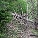 """ein """"kleiner"""" Baum versperrte unseren Weg"""