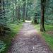 Sehr schöner Waldweg der...