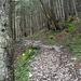Es geht durch schönen dichten Wald westlich der Spitzingalmen in gleichmäßiger Steigung bergauf