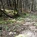 Der Wald wird immer dichter
