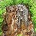 Spannende Stumpfstruktur.. :-)