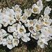 Frühling! Krokusse 2