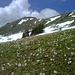 Und weils so schee war: Krokantenwiese mit Gipfelblick.
