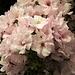 Hübsche Blüten