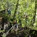Im dunklen Walde..da verstecken sich die Räuber...