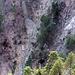 Blick in die Falletsche, auf meine Aufstiegsroute: ich bin von unten links die Runse hoch und etwas unterhalb der Bildmitte auf die bewaldete Rippe gestiegen. Über diese bis zum Felsband und den Wegspuren der Falletschen-Traverse.