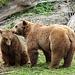 """Presso la nuova """"fossa"""" degli orsi."""