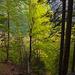 Zartes Grün überall