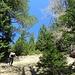 auf aussichtsreichem Waldpfad zum Pletzachkogel