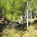 so macht auch ein Waldweg Spaß!