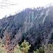 Blick in die Fallätsche und das Sandsteinband, unter dem sich eine Wegspur befindet. Ich bin die bewaldete Rippe hochgestiegen, die fast in der Mitte des rechten Bildrands das deutliche Felsband erreicht.