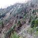 Blick in die Falletsche, auf meine Aufstiegsroute über die bewaldete Rippe bis zum Felsband und den Wegspuren der Falletschen-Traverse.
