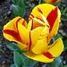 ...die einzelnen Tulpen benamsen