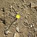 Die Natur erobert einen Erosionshang zurück