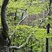 Frühlingshafter Wald oberhalb Scharten.