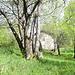 l'isolata baita nel bosco a metà strada