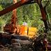 Holzarbeiten auf dem Weg zum Kaiserhaus: Weg gesperrt bis Ende Mai