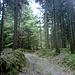 Auf guten, trockenen Waldwagen  geht's bergan zur Bergkappelle.