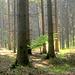 ...Morgenstimmung im Wald.