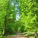 Kurz darauf beginnt mit dem Aufstieg zum Kamm eine Etappe unter herrlichstem Laubwald.
