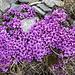 Farbtupfer am Gipfel des Muot da l'Hom