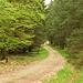 Durch den grünen Wald