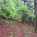 Schöner Weg durch Mischwald