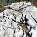 kleiner Gipfel - mit fünf Markierungen