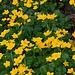 gelbes Blumenmeer I