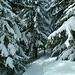 Schnee, Schneee, Schneeee