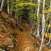 il sentiero della via normale per il monte Freddone...