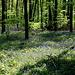 Frühlingswald!