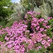 Blumenpracht auf Lipari