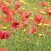 Blumenpracht in Lipari