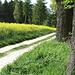 Am Waldrand geht´s entlang bis zum Kühler Wald!