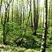 Am tiefsten Punkt des Kühler Waldes fließt der Kühlerbach. Auf dem sumpfigen Boden gedeiht ein prächtiger Erlenwald.