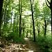 Im Kühler Wald!
