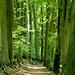 Die Allee Anfang Mai 2013! Grünes Licht macht sich breit!