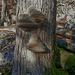 Holzige Pilze