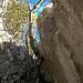 Aus-resp.Abstiegs Couloir. Wir sind jedoch rechts dem Fels entlang zum Standplatz hinüber traversiert (Kabel)