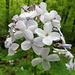 Blüte, eine von Tausenden