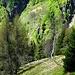 In allen möglichen Grüntönen leuchten die Tessiner Bergwälder: Im Aufstieg von Mornera zur Capanna Albagno.