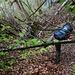 Dschungelfeeling. Auf dem Weg zur Quelle des Nünbrunnens I