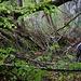 Dschungelfeeling. Auf dem Weg zur Quelle des Nünbrunnens II